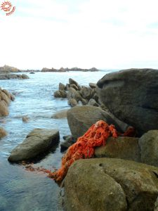 discarded fishing net on coast