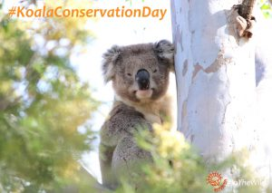 #koalaconservationday