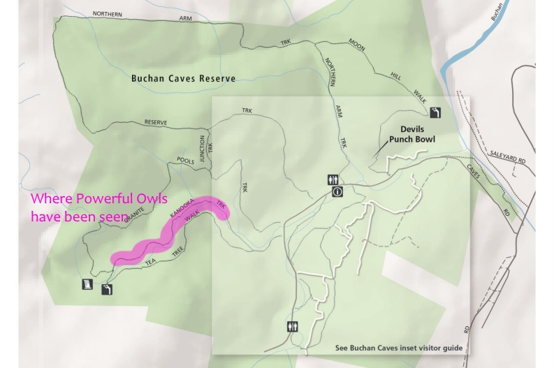 Buchan Caves map Powerful Owl