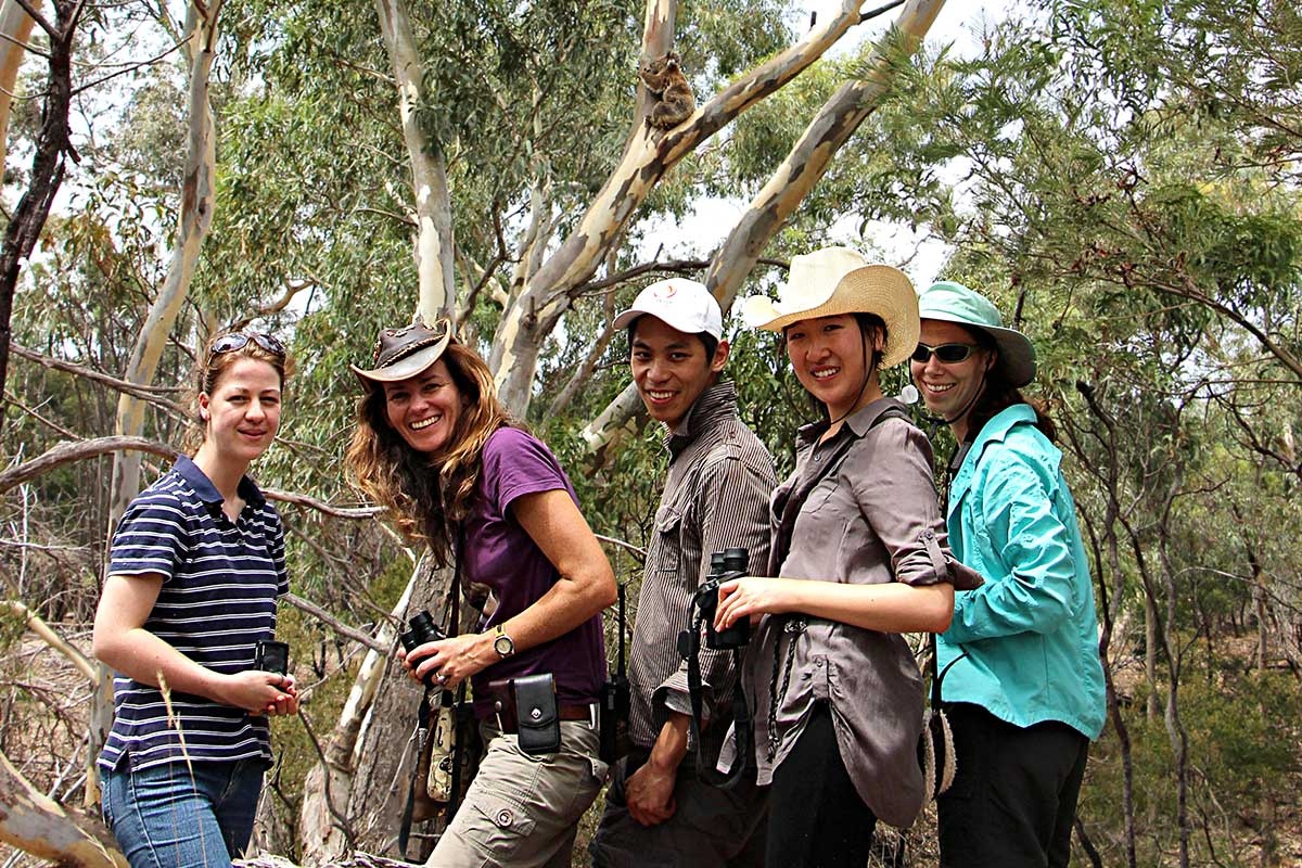 tour guests with wild koala