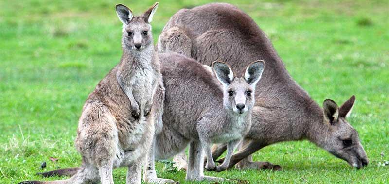 Wildlife in the wild, nature tours Australia | Echidna Walkabout