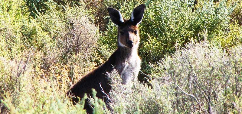 Mungo Outback Journey