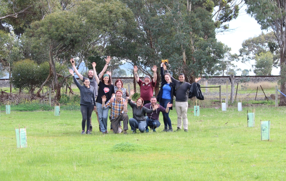 tree planting for koalas