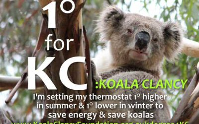 One Degree for Koalas #1degree4KC