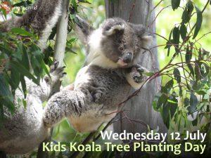Kids Koala Tree Planting