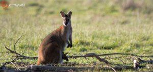 best tour for Australian wildlife