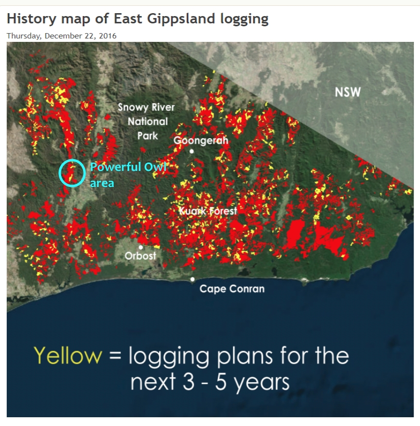 Logging planned Powerful Owl habitat Buchan