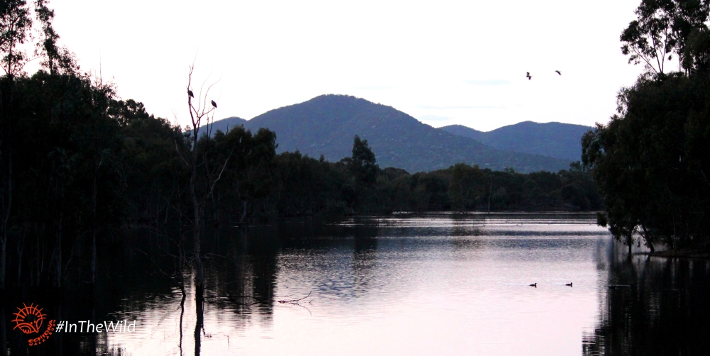 billabong waterhole at sunset
