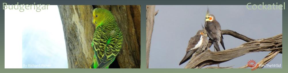 rare parrots of Mungo