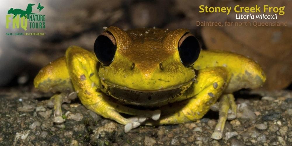 Frogs seen in winter in tropical north Australia