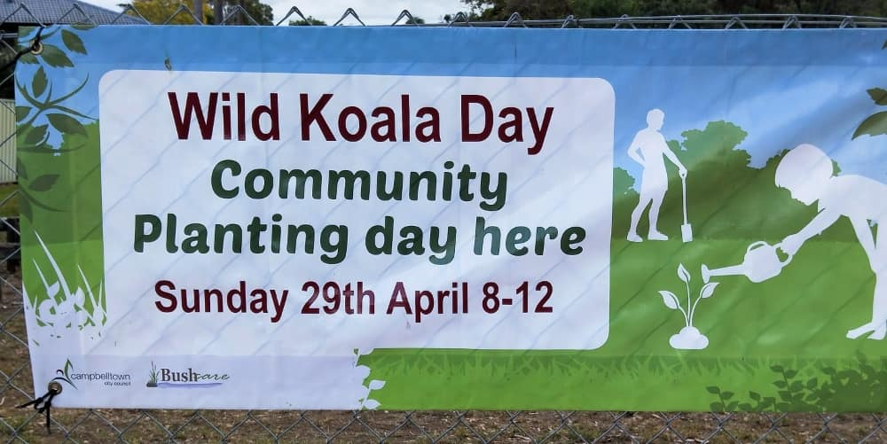 government support for wild koalas