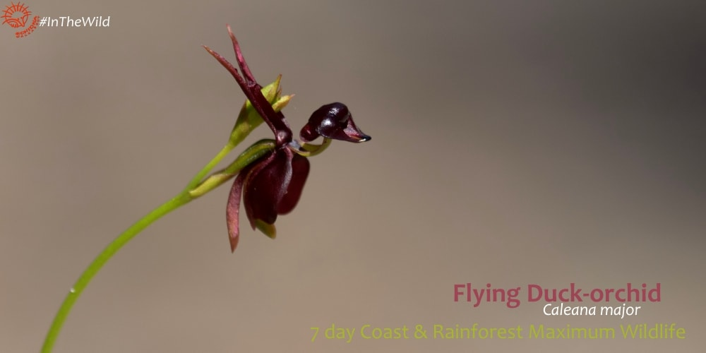 orchid 7 day coast & rainforest wildlife tour