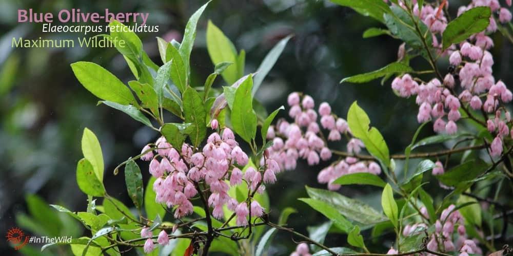 pink wildflowers maximum wildlife
