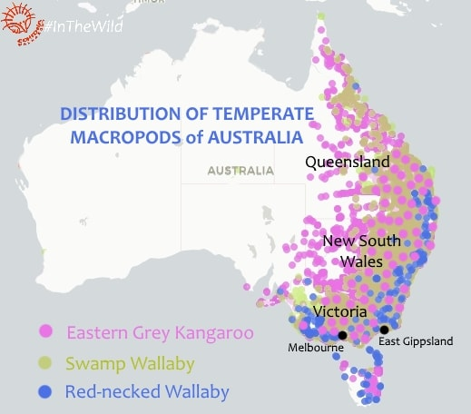 Distribution map Eastern Grey Kangaroo Swamp Red-necked Wallaby
