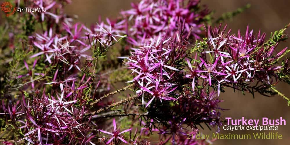pink purple wildflowers wildlife tour australia