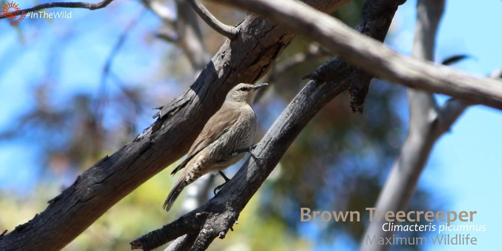 australian birds of the outback