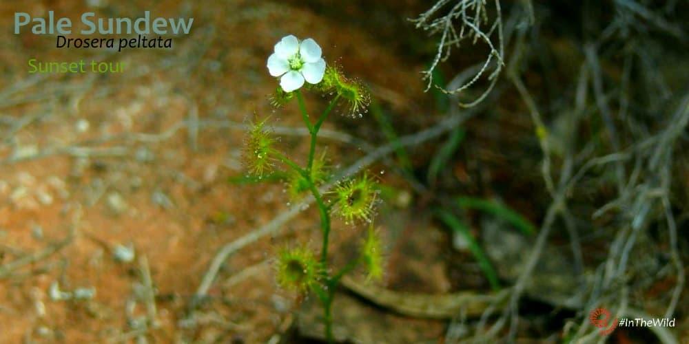 tour Australian plants