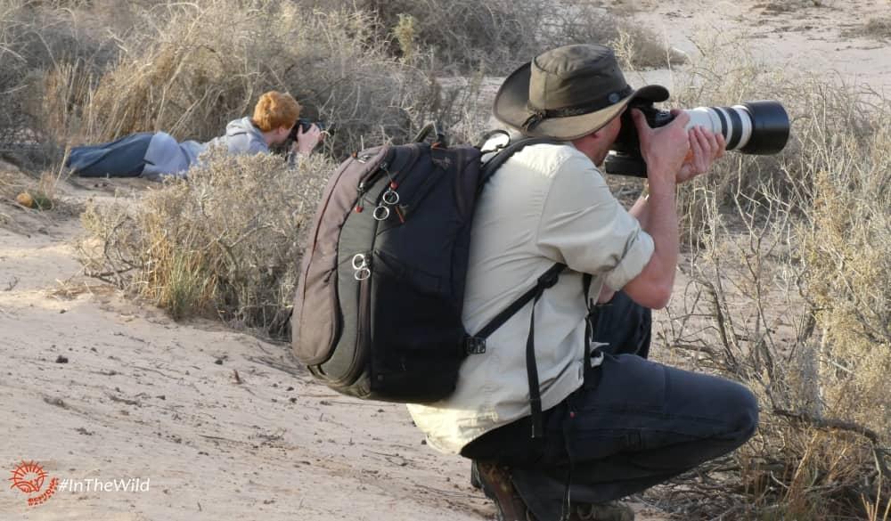 kangaroo photography