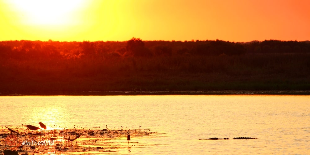 sunset Mary river with crocodile wildlife Australia
