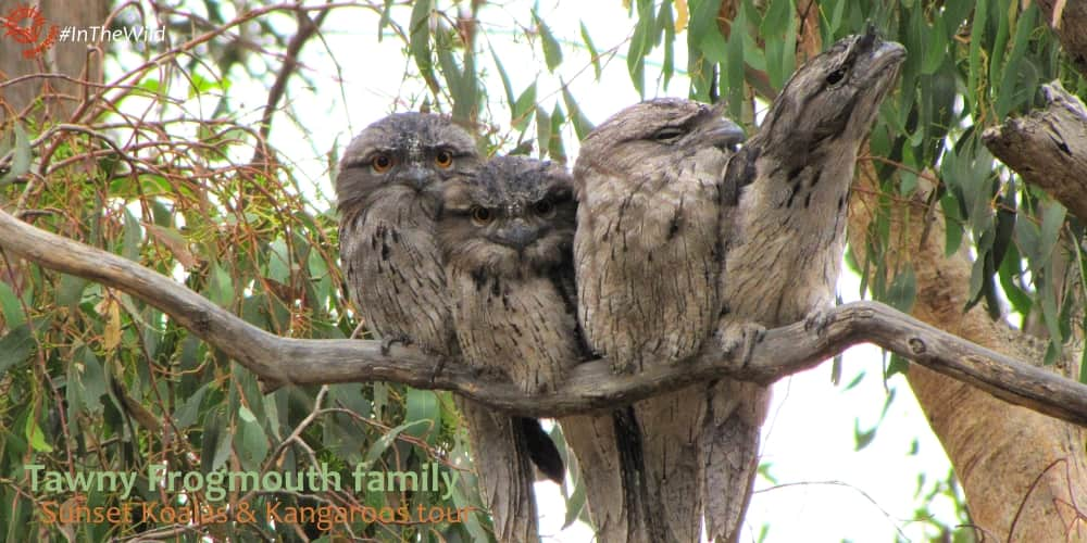 bird family on branch