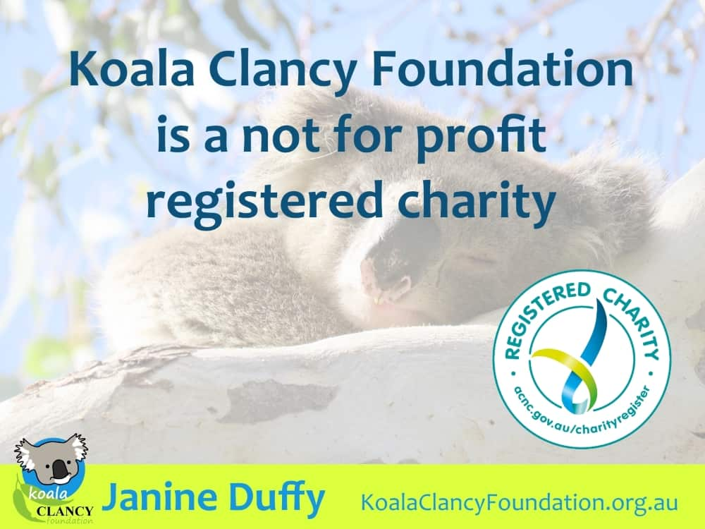 Koala Clancy Foundation charity