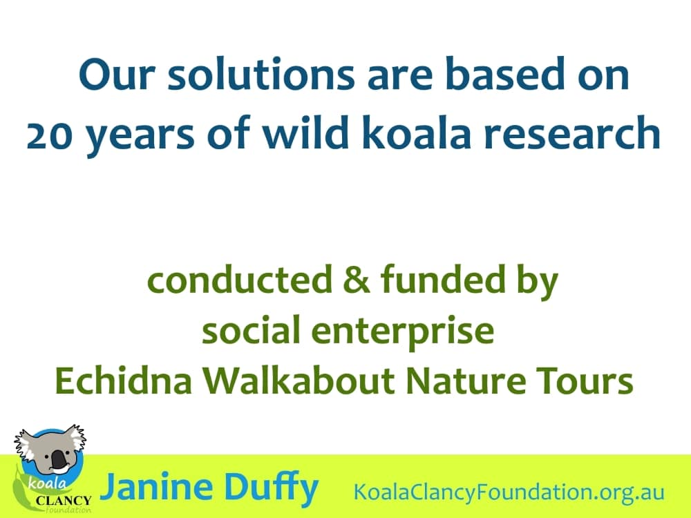 Wildlife Tour operator supports koala tree planting