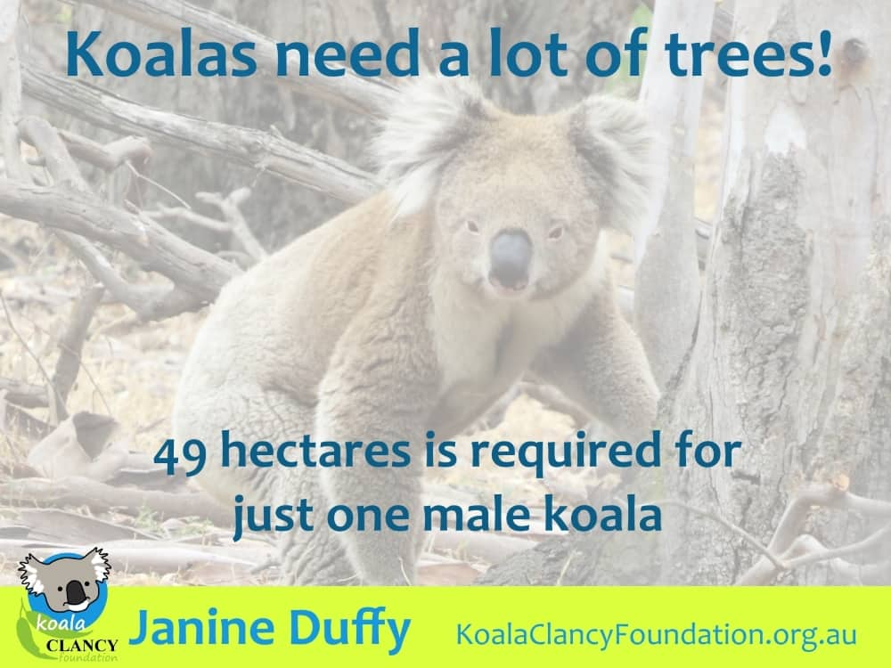 koalas need many trees