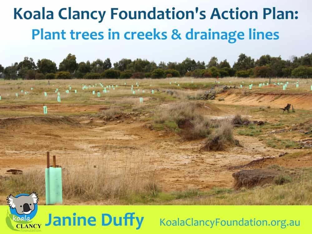 koala tree planting in rivers and drainage lines