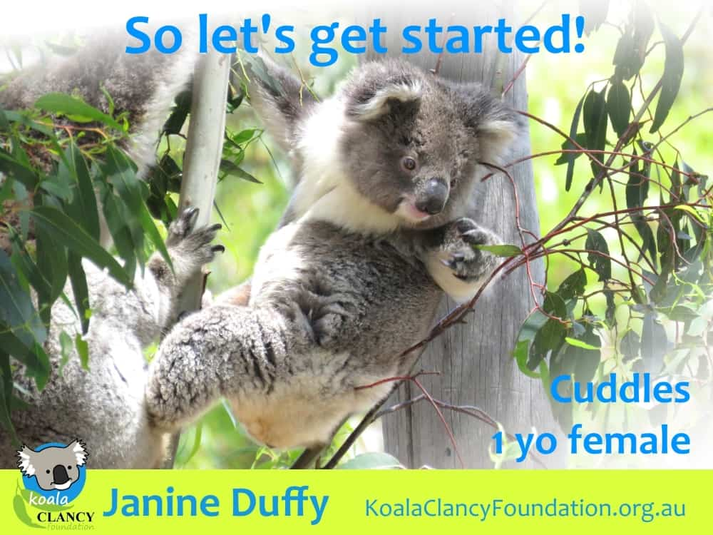 cute baby koala needs trees planted now