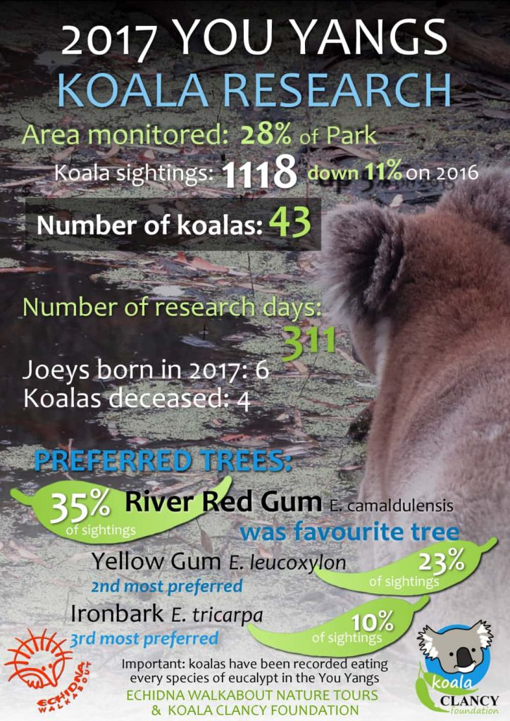 wild koala research report