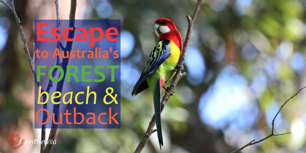 Escape to Australia's Forests, Beach & Outback