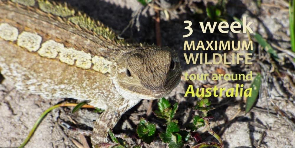 3 week Maximum Wildlife tour