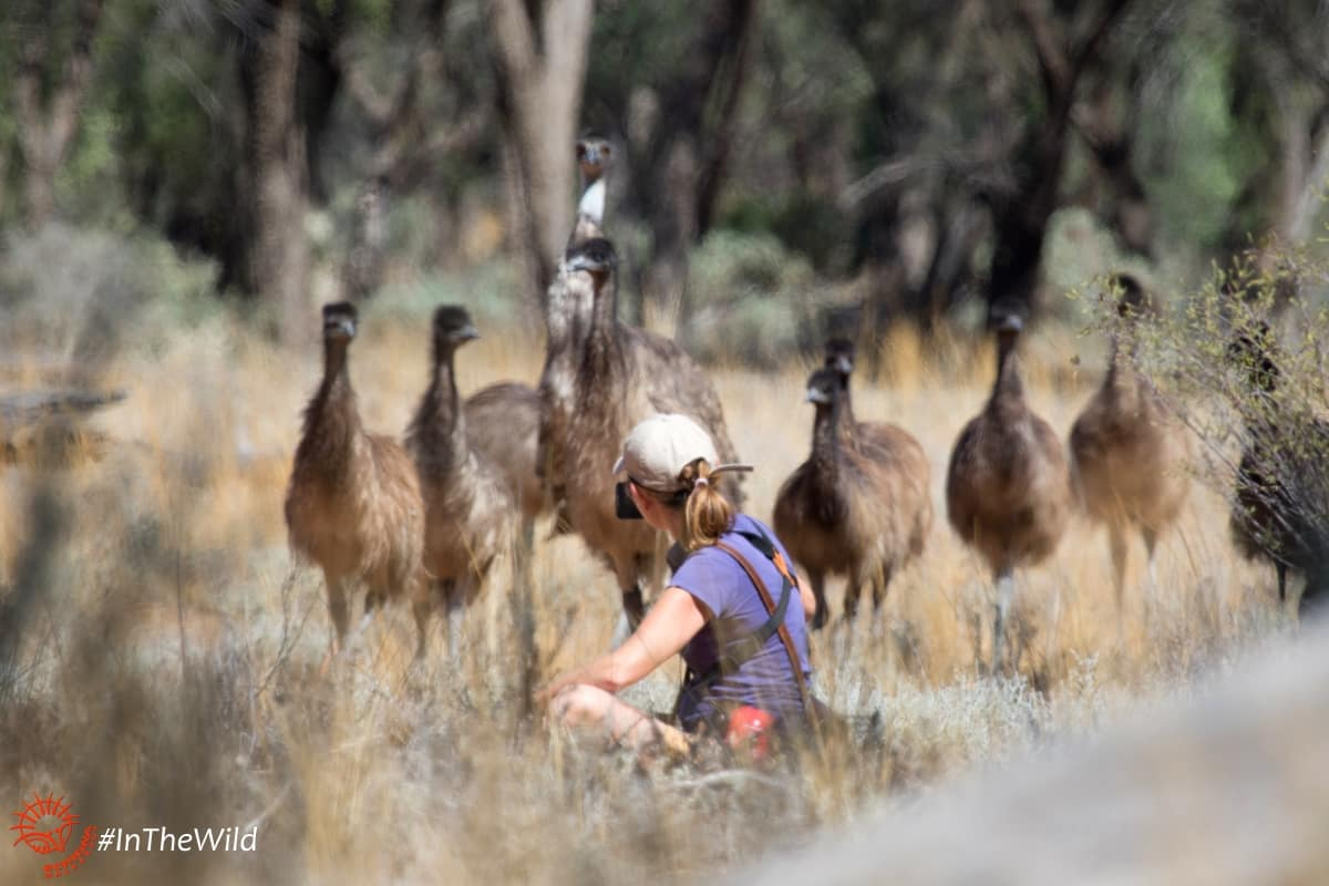 JANINE-wildlife-guide-emus-mungo