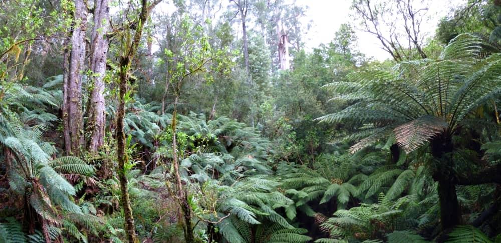 rainforest 21 day wildlife safari Australia