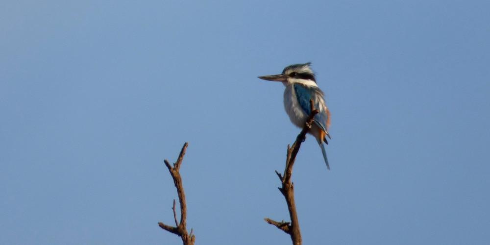 kingfisher Mungo Outback Journey Maximum Wildlife tour