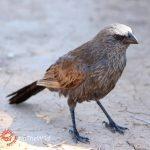 Australia's weirdest animals