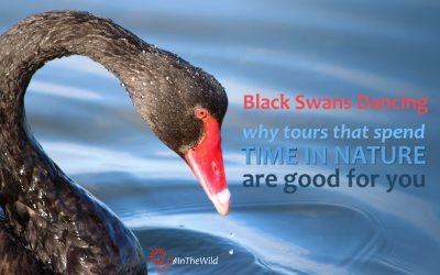 Black Swans Dancing: Why tours that spend time in nature are good for you.