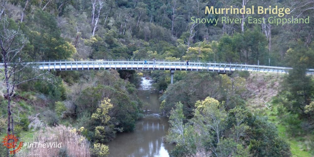 bridge through forest multi-day tour australia