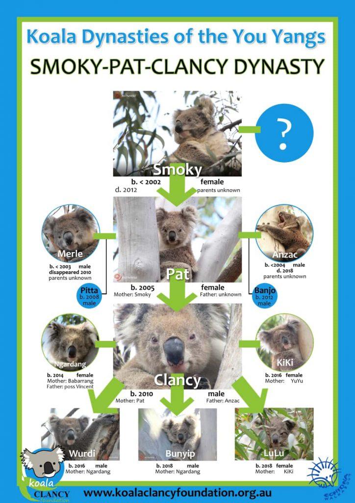 koala dynasties family trees