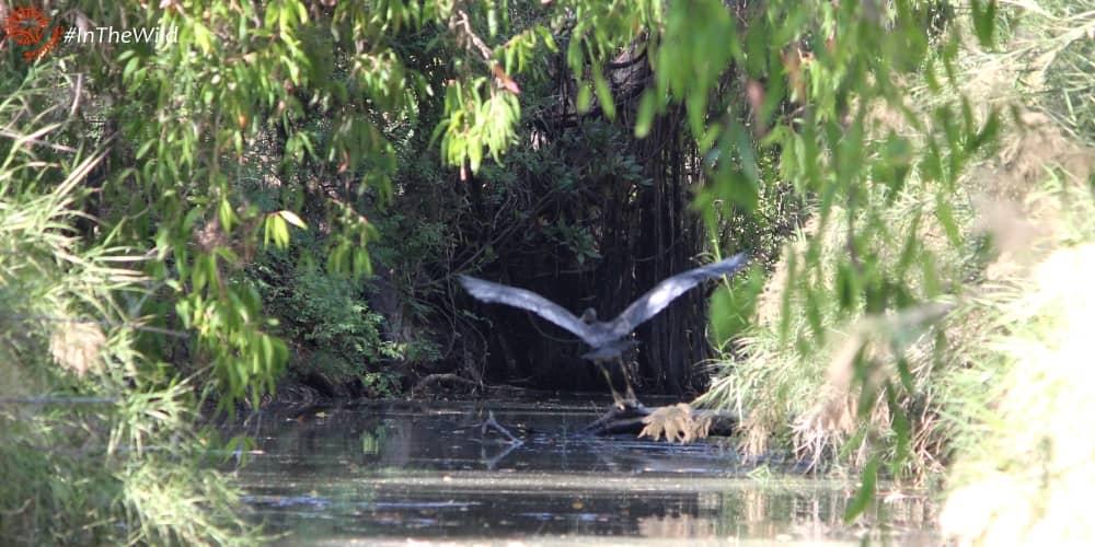 Northern Territory wildlife species seen on tour