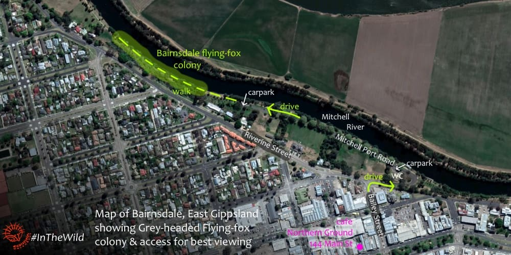 map of where to see flying-foxes in Bairnsdale