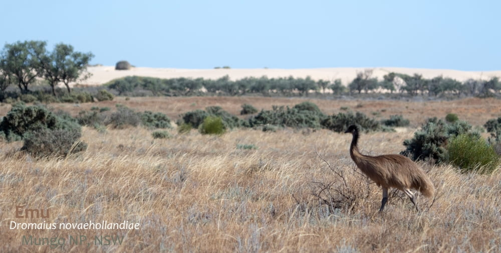 travel sand dunes Australia Emu