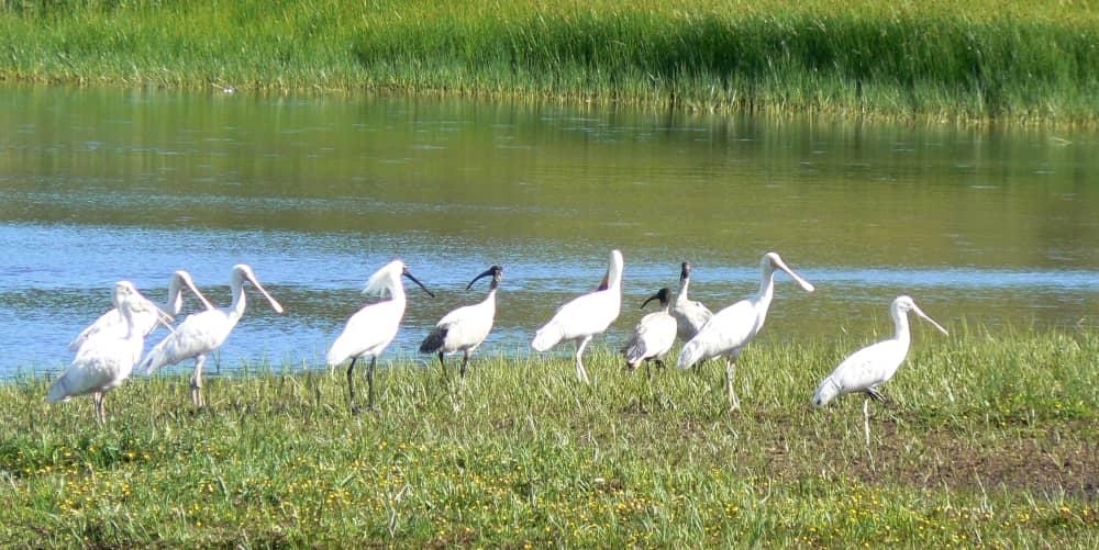 great ocean road birdlife in june july august