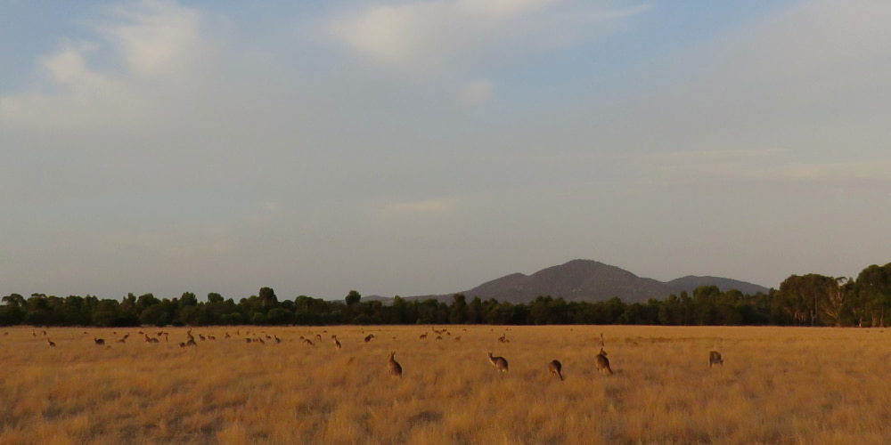 A future for the You Yangs region