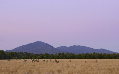 An Aboriginal Welcome to the You Yangs