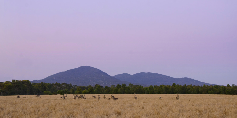 You Yangs near Melbourne with kangaroos