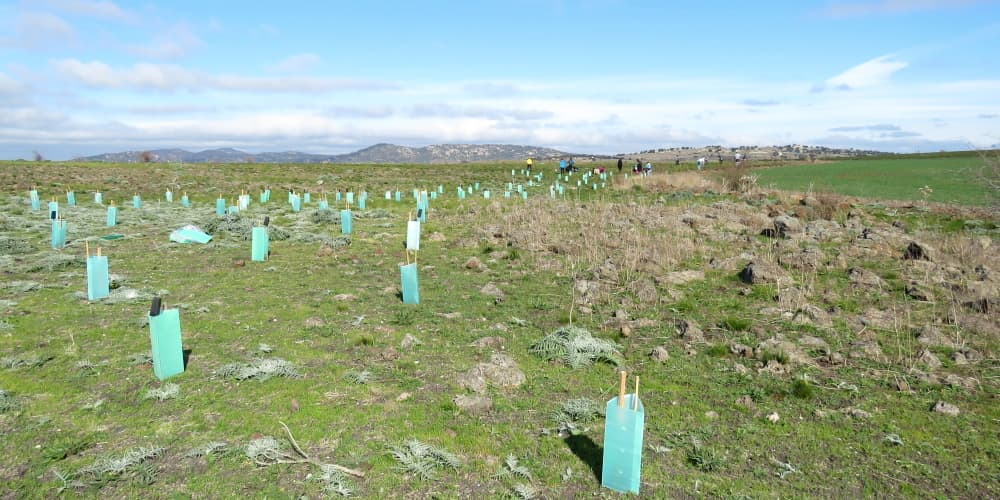 tree planting by community groups You Yangs region