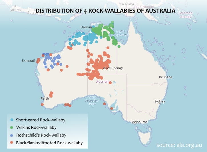 Distribution map rock wallaby Petrogale lateralis brachotis rothschildi wilkinsi Australia