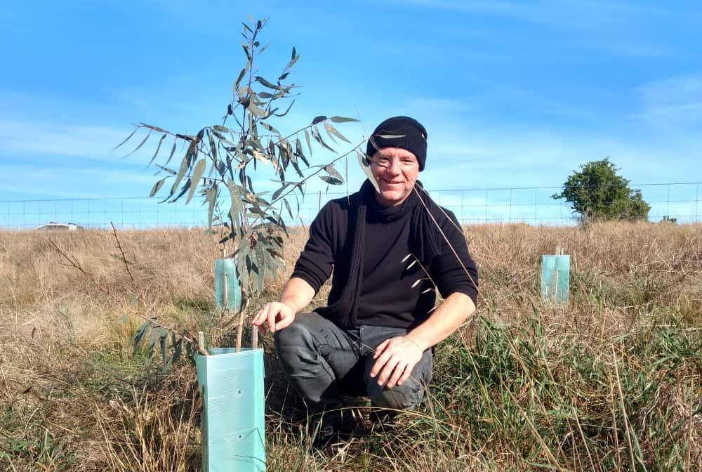 koala-tree-planted