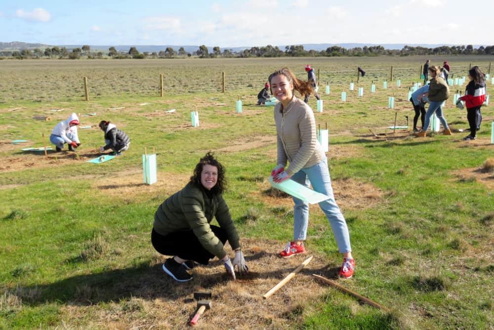 TREE-planting-for-koalas